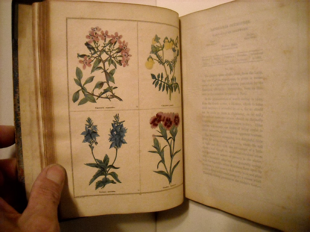 Image for Botanic Garden: Consisting of Highly Finished Representations of Hardy Ornamental Flowering Plants Culktivated in Great Britain with Their Classification, History, Cultue & Other Interesting Information. Vols I-III.